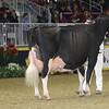 Royal16_Holstein_1M9A1664