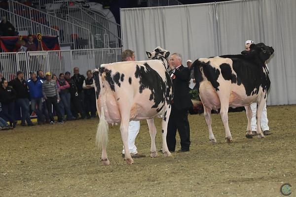 Royal16_Holstein_1M9A1435