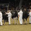 Royal16_Holstein_1M9A1260