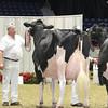 Royal16_Holstein_L32A4809