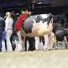 Royal16_Holstein_L32A5035