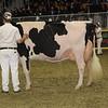 Royal16_Holstein_1M9A1361