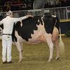 Royal16_Holstein_1M9A1416