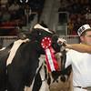 Royal16_Holstein_1M9A1224