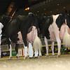 Royal16_Holstein_L32A4968
