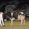 Royal16_Holstein_1M9A1736