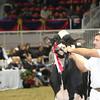 Royal16_Holstein_L32A4746
