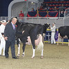 Royal16_Holstein_1M9A1328
