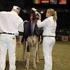 Royal16_Holstein_1M9A1794