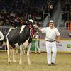 Royal16_Holstein_L32A4752