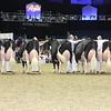 Royal16_Holstein_L32A4807