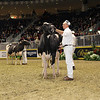 Royal16_Holstein_1M9A1173