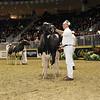 Royal16_Holstein_1M9A1173