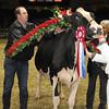 Royal16_Holstein_1M9A1838