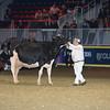 Royal16_Holstein_L32A4959