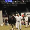 Royal16_Holstein_1M9A1312