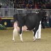 Royal16_Holstein_1M9A1649