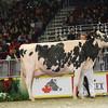 Royal16_Holstein_L32A4903