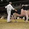 Royal16_Holstein_1M9A1178