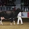 Royal16_Holstein_L32A4947