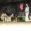 Royal16_Holstein_L32A4796