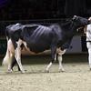 Royal16_Holstein_1M9A1612