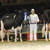 Royal16_Holstein_L32A4798