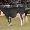 Royal16_Holstein_1M9A1422