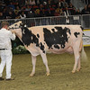 Royal16_Holstein_1M9A1414