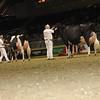 Royal16_Holstein_1M9A1722