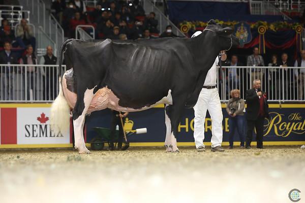 Royal16_Holstein_L32A4974
