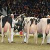 Royal16_Holstein_L32A4734