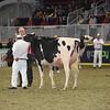 Royal16_Holstein_1M9A0439