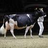 Royal16_Holstein_1M9A1525