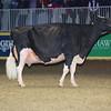 Royal16_Holstein_L32A4956
