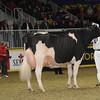 Royal16_Holstein_1M9A1665