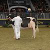 Royal16_Holstein_1M9A1406