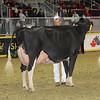 Royal16_Holstein_1M9A1252