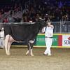 Royal16_Holstein_L32A4931