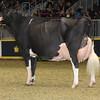 Royal16_Holstein_1M9A1698