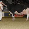 Royal16_Holstein_1M9A1688