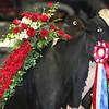 Royal16_Holstein_L32A5045