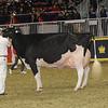 Royal16_Holstein_1M9A1350