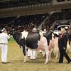 Royal16_Holstein_1M9A1204