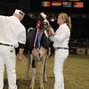Royal16_Holstein_1M9A1795