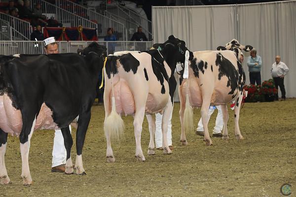 Royal16_Holstein_1M9A1250