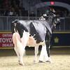 Royal16_Holstein_1M9A1474