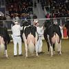 Royal16_Holstein_1M9A1302