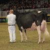 Royal16_Holstein_1M9A1430
