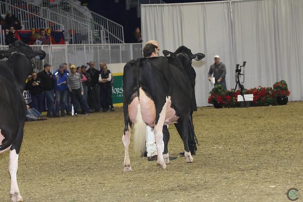 Royal16_Holstein_1M9A1434